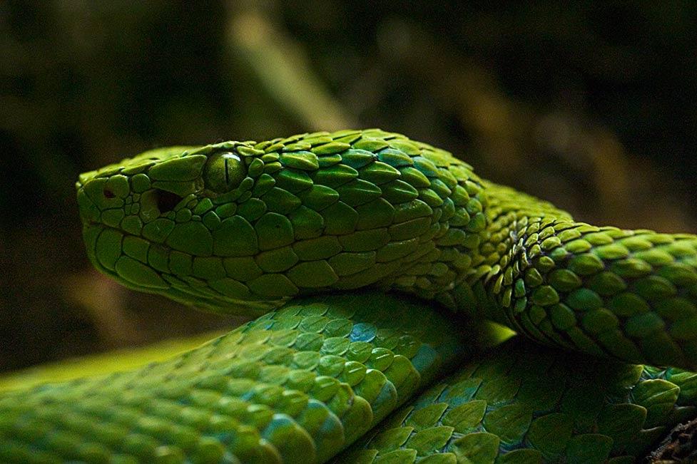 n_snake_01