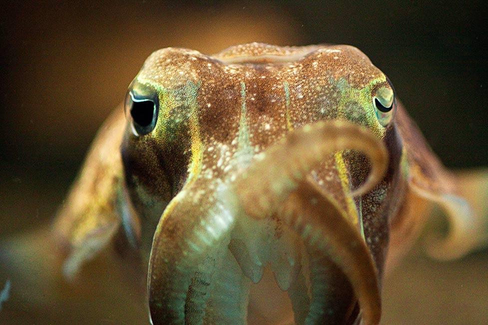 n_squid