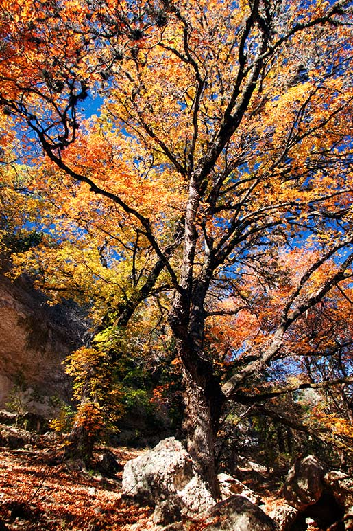 p_tree_01