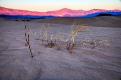 Death Valley Dunes Remains