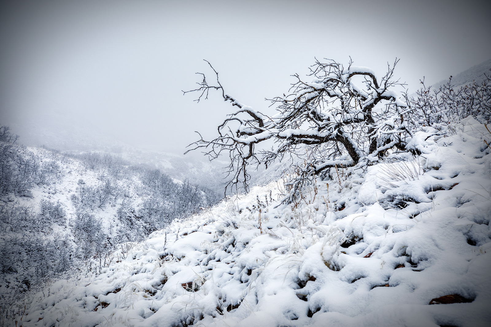 snowytrees_01