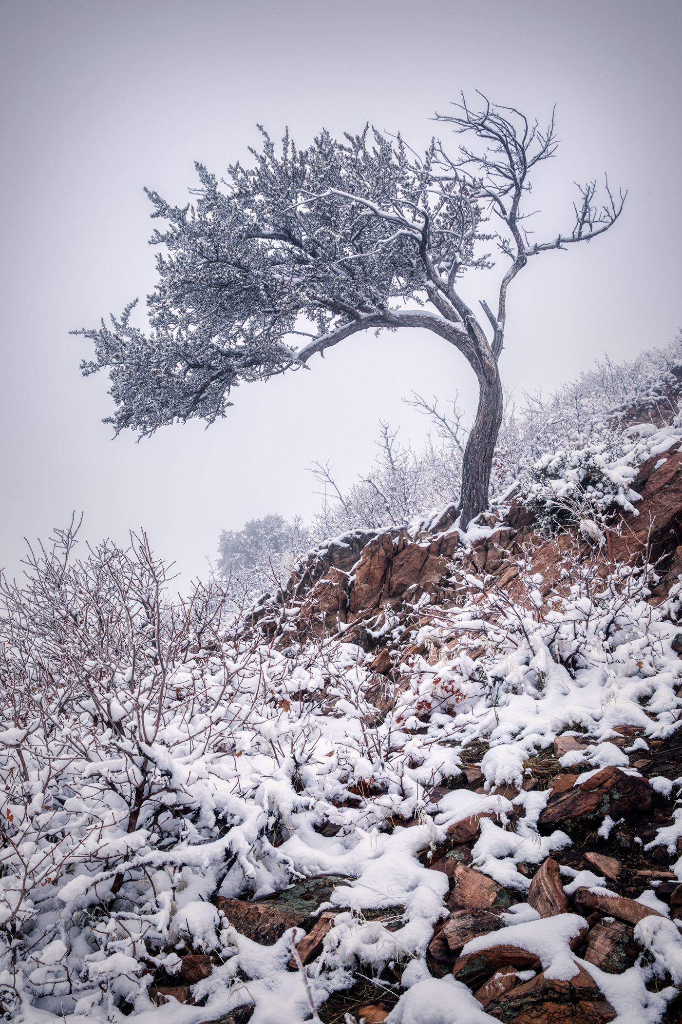 snowytrees_03