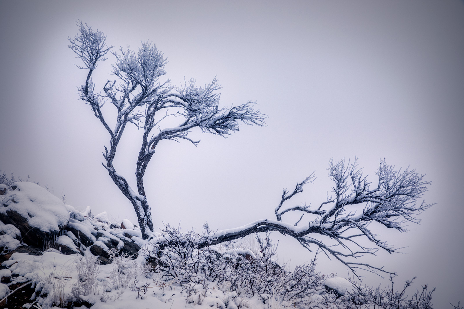 snowytrees_04