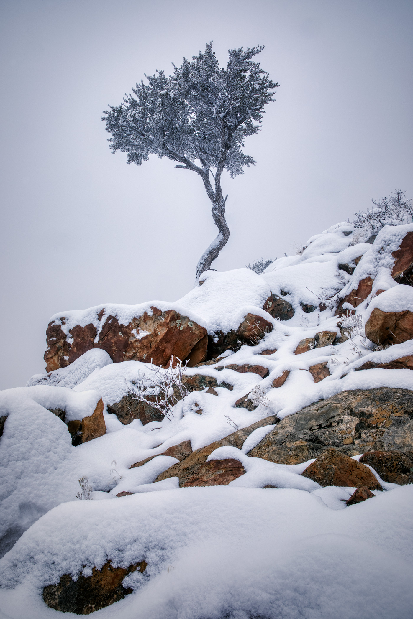 snowytrees_05