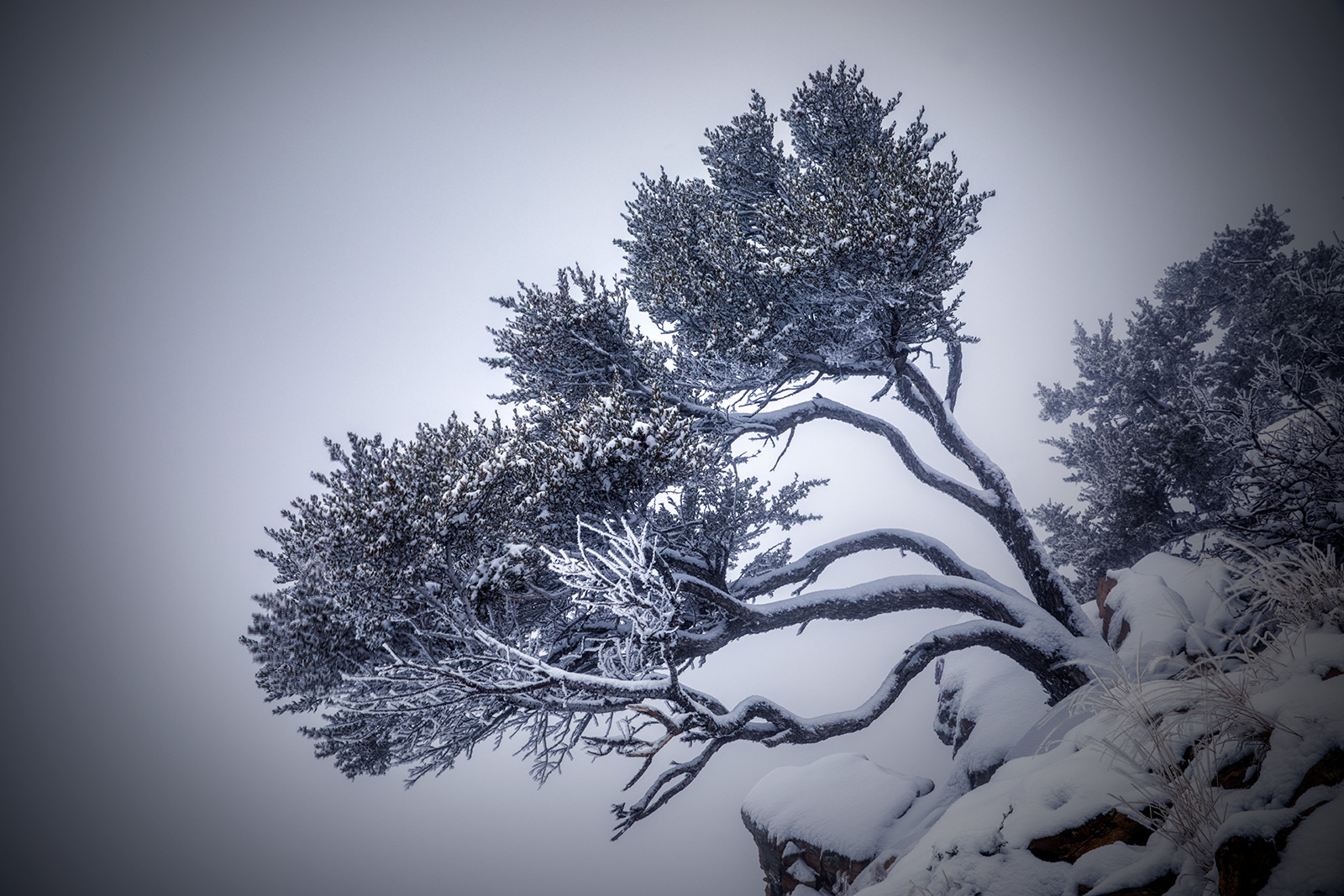 snowytrees_06