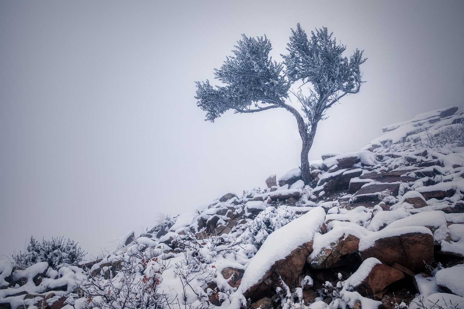 snowytrees_07