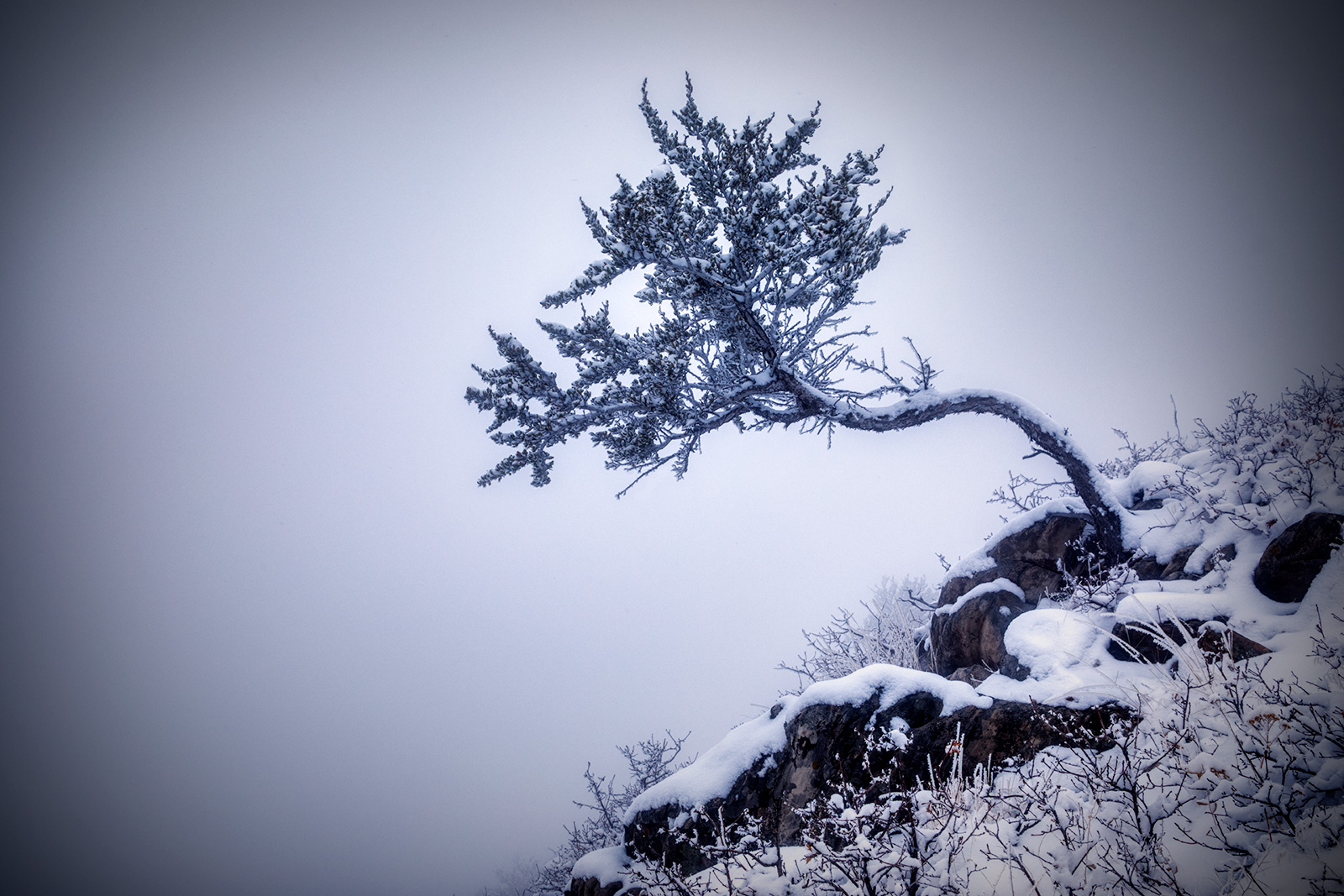 snowytrees_09
