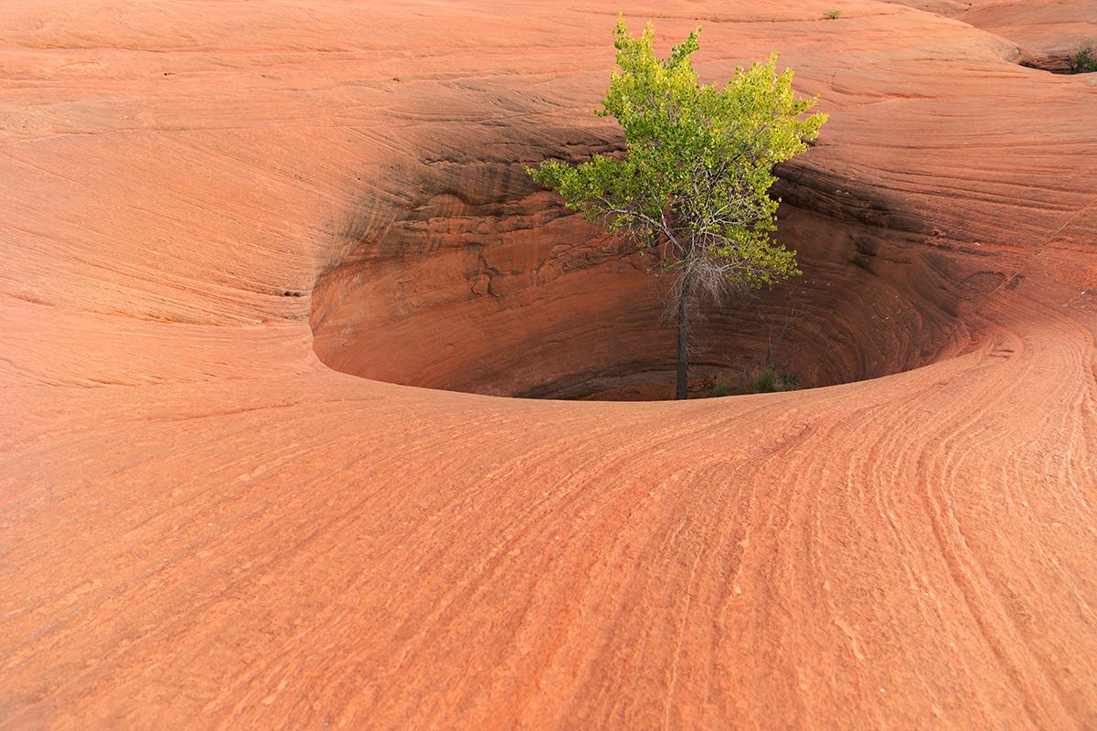 Pothole Tree