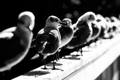 n_birds