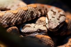 n_snake_02