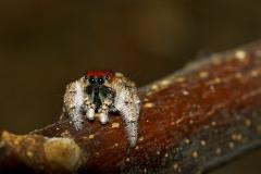 n_spider_02