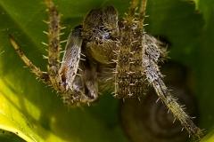 n_spider_03