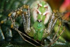 n_spider_04