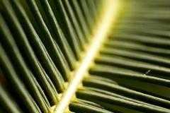 p_leafs