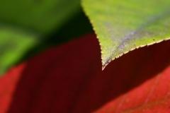 p_redgreen